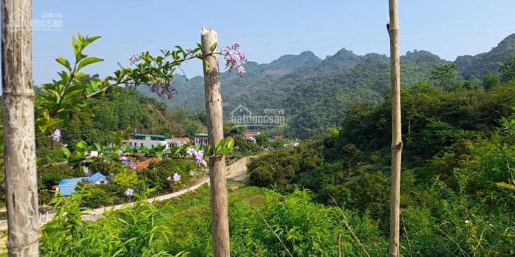Bán gấp mảnh đất 3678m2 thị trấn Mộc Châu có giá rẻ nhất thị trường ảnh 0