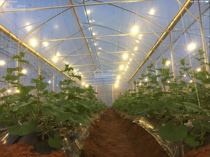 Chính chủ cần bán trang trại 8 hecta đất tại khu NNCNC gần Mũi Né Bình Thuận ảnh 0