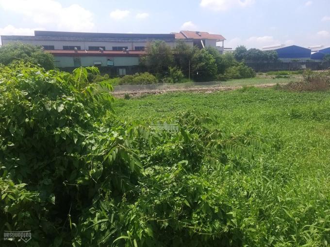 Bán 3,5 mẫu đất kho xưởng ngoài KCN gần cảng Long An ảnh 0
