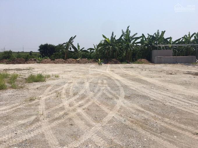 Bán nhanh 3ha đất nông nghiệp Ngũ Hiệp, Thanh Trì, HN ảnh 0