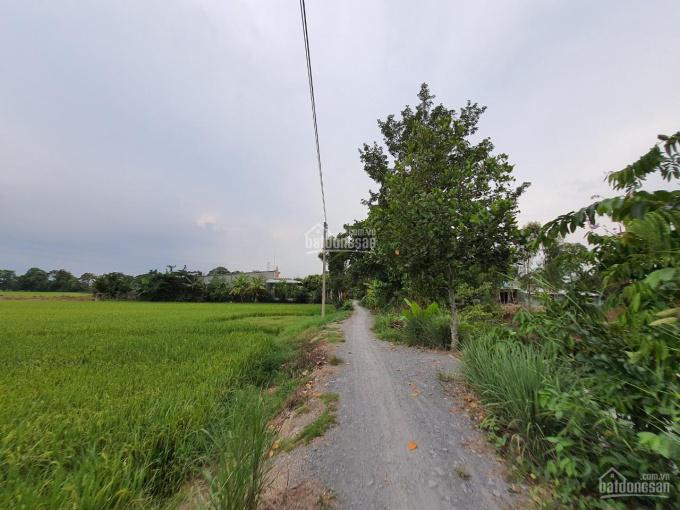 Bán vườn xoài 5.800m2 (32x182m, đất lúa) đường đá xe ba gác, Xã Mỹ Thọ, H. Cao Lãnh, ĐT ảnh 0