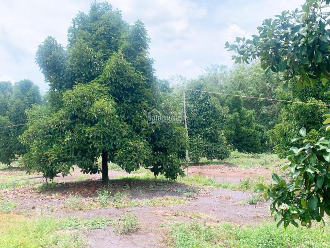 Cần bán 4 ha đất rẫy Phú Riềng thích hợp làm nơi nghỉ dưỡng ảnh 0