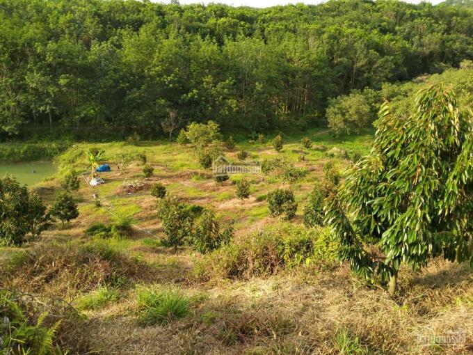 Bán vườn Bù Đăng, Bình Phước 2ha2 vườn sầu riêng năm 2, giá 1,3 tỷ tất cả ảnh 0