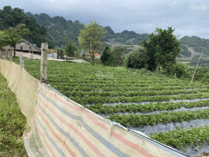 Bán lô đất vuông vắn - duy nhất ở Mộc Châu full thổ cư, gần rừng thông Bản Áng và Chimi Farm ảnh 0