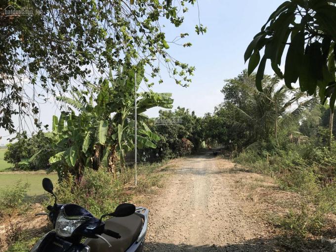 Bán gần 10.000m2 làm nhà vườn, 1,8 tỷ, về Sài Gòn 2,5h, gần KDL Xẻo Quýt ảnh 0