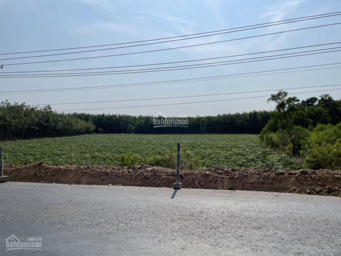 Bán gấp 3,3 ha, đất ngộp 2 mặt tiền đường 793, ấp Thanh Hòa xã Thạnh Bình, Tân Biên, Tây Ninh ảnh 0