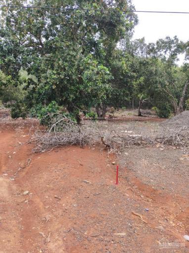 Bán vườn điều 9 năm tuổi xã Tân Hưng, Đồng Phú 340tr/lô sổ hồng riêng ảnh 0