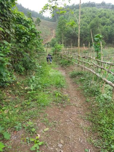Bán đất Đoàn Kết, Yên Thủy, Hòa Bình. Sẵn hơn 1000 cây bưởi trồng 7 năm cách đường HCM chỉ 5km ảnh 0
