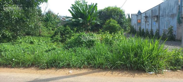GĐ kẹt tiền cần bán gấp lô đất đẹp 2 MT, vuông vức, SHR, thổ cư tại P. Xuân Tân, TP Long Khánh ảnh 0