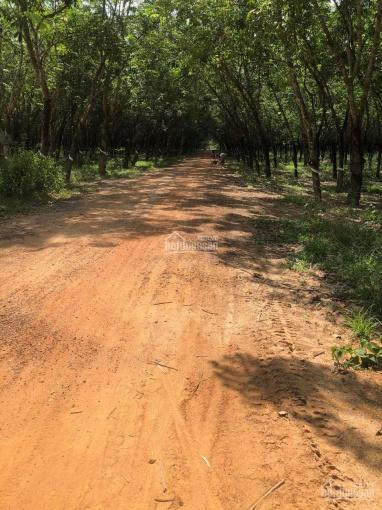Bán gấp 12 mẫu đất cao su, Xã Hòa Hiệp, Huyện Tân Biên, Tây Ninh ảnh 0