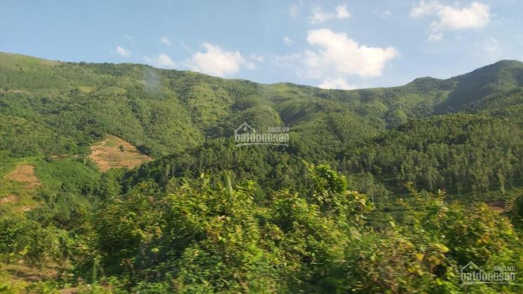 Bán đất rừng sản xuất tại Cun Pheo, Mai Châu, Hòa Bình, đường ô tô lên tận đỉnh. LH: 0915628886 ảnh 0
