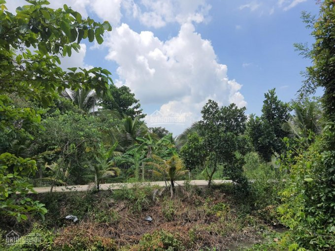 Bán đất vườn đường Phan Văn Bảy ảnh 0