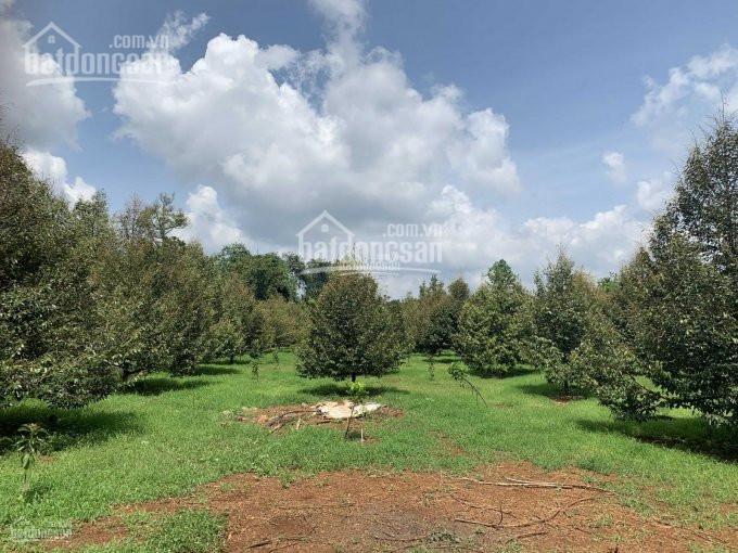 Bán đất vườn xã Đồi Rìu - Hàng Gòn, TP. Long Khánh, giá bán 1.5tr/m2 bao gồm các loại cây ăn trái ảnh 0
