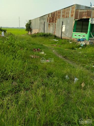 Bán đất mặt tiền ở xã Phú Thuận A, huyện Hồng Ngự, tỉnh Đồng Tháp ảnh 0
