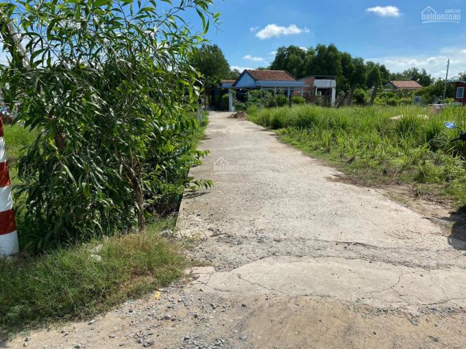 Bán đất vườn 100% huyện Cần Giuộc 10000m2 ảnh 0
