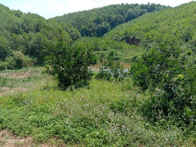 Bán 3.3ha đất thoải, có ao phù hợp làm trang trại, homestay tại Lạc Thủy, Hòa Bình ảnh 0