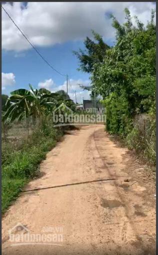Cần bán vườn trồng cây ăn trái tại Bình Lộc, TP Long Khánh - diện tích 10150m2 - giá 7,7 tỷ TL ảnh 0