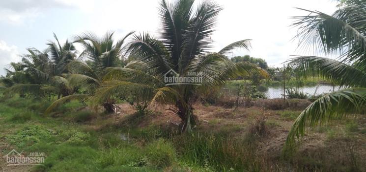 Bán 1425m2 đất trồng cây mặt tiền Kênh 10, thuộc xã Lê Minh Xuân, Bình Chánh ảnh 0