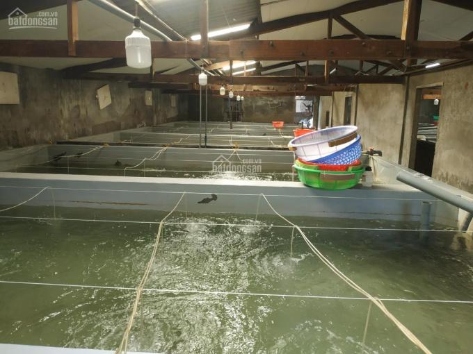 Trại nuôi hải sản giống chính chủ cần bán gấp