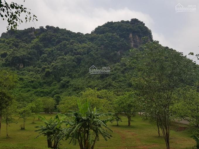 Cần bán 80.000m2 đất trồng cây, đất ở và đất rừng sản xuất Hòa Phú, Hòa Vang, Đà Nẵng ảnh 0
