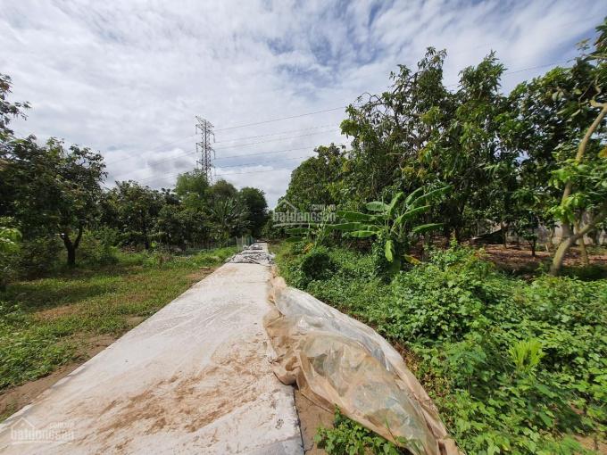 Bán 8.100m2 vườn xoài, lối vào đan 2.5m, xã Bình Hàng Trung, H. Cao Lãnh ảnh 0