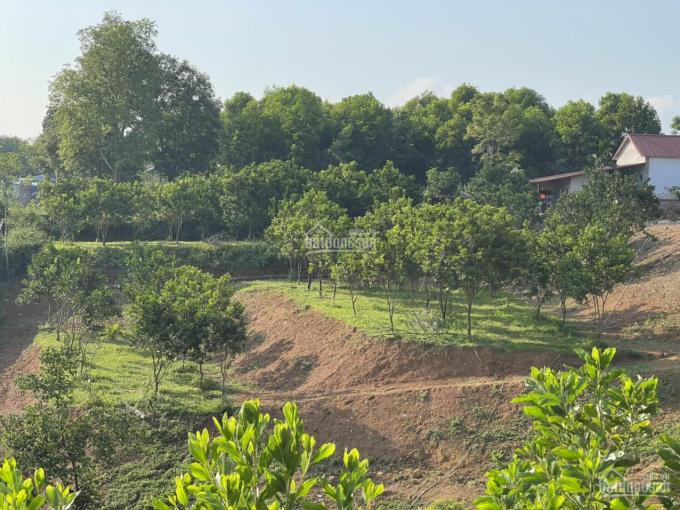 Bán đất Nhuận Trạch, Lương Sơn, Hòa Bình giá rẻ nhất thị trường diện tích 5.200m2 ảnh 0