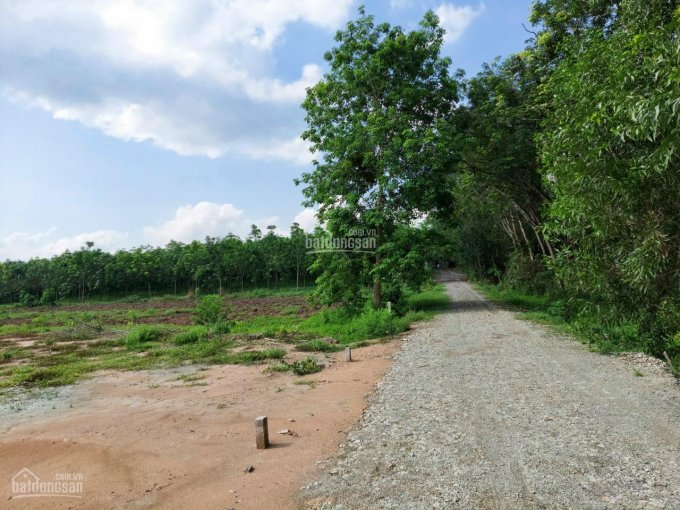 Bán 348m2 ngang 6m dài 70m phường Chánh Phú, bán 750 triệu ảnh 0