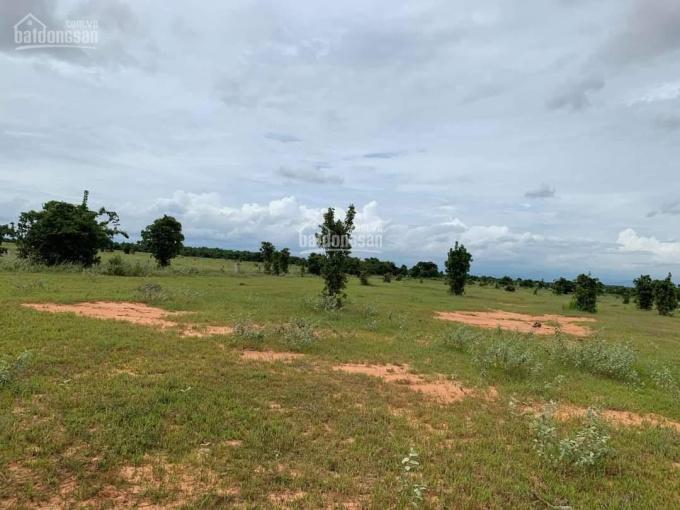 Đất vườn Phan Thanh SHR 6396m2 chỉ 671 triệu, có đường trên sổ, gần KDC, chính chủ ảnh 0