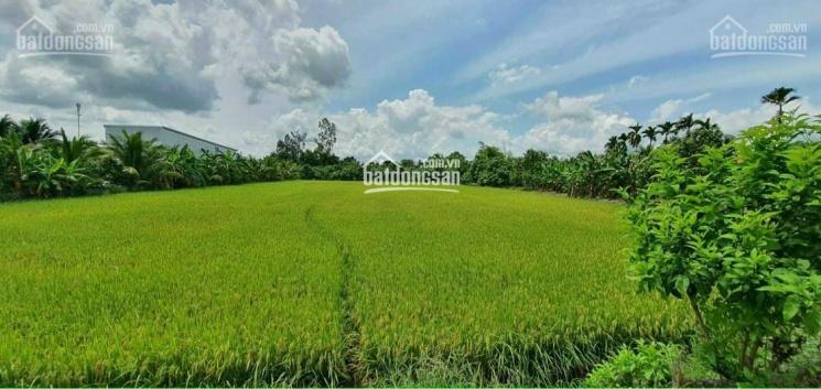Bán đất công đường Quốc Lộ 61C - đoạn 2.000 Châu Thành A, Hậu Giang ảnh 0