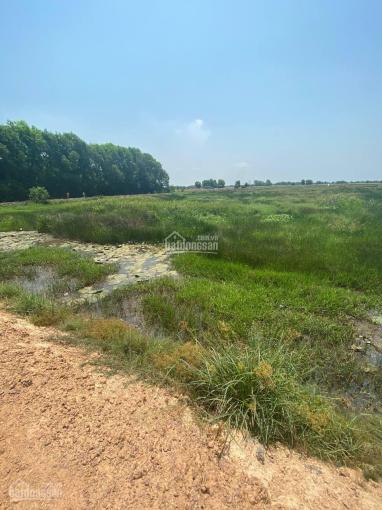 Bán 9858m2 đất nông nghiệp tại Lợi Thuận, Bến Cầu, xe oto tới đất. Giá 3 tỷ ảnh 0