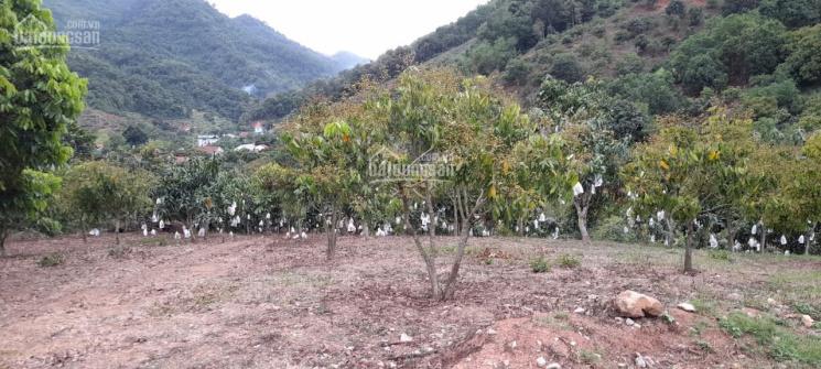 Bán đất Mộc Châu, 400m2 thổ cư, diện tích lớn giá rẻ nhất thị trường ảnh 0
