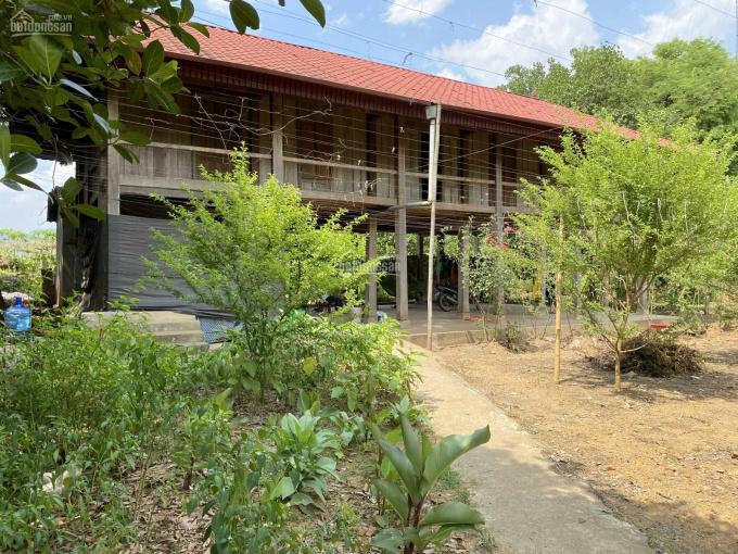 Ôm ngay 1 nhà sàn rộng 7 m + dài 14m, toàn gỗ quý. Khi cọc DT 1,8ha đất, giá chỉ 2tỷ8 ảnh 0