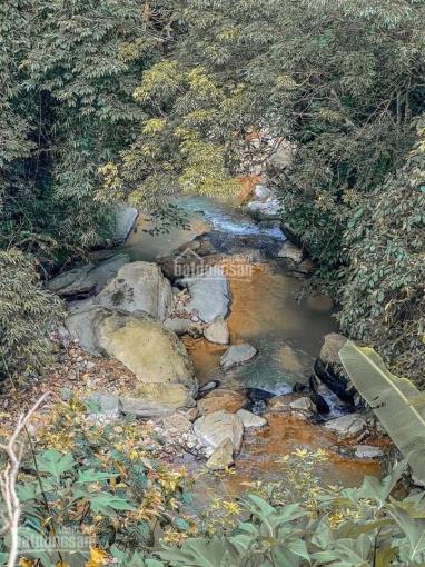 Đất nghỉ dưỡng khu du lịch tại thị trấn Tam Đảo Vĩnh Phúc, giá rẻ nhất 16tr/m2, 0924465555 ảnh 0