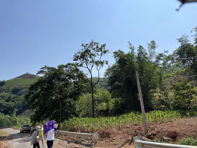 Bán mảnh đất rẻ nhất Mộc Châu (dưới 100k/1m2) có sẵn cây ăn quả, ao cá - rất phù hợp làm trang trại ảnh 0