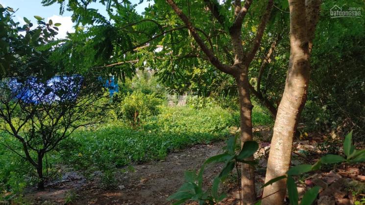 Bán 1100m = 1,1 sào, đất gần cây xăng và UBND Thạnh Phú, Vĩnh Cửu, Đồng Nai ảnh 0