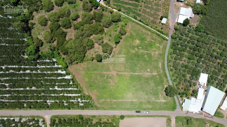 Cần bán đất thổ cư 120 - 250m2 giá chỉ 600 triệu ngay huyện Đất Đỏ, BR - VT ảnh 0