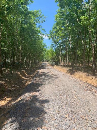 Bán 15 sào đất thổ cư nhà vườn, sinh thái nghỉ dưỡng tại xã Phú Lý, Vĩnh Cửu, Đồng Nai ảnh 0