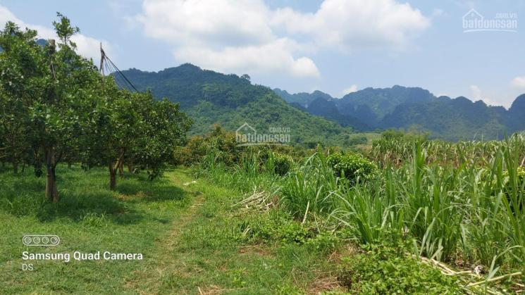 Bán đất Tân Lạc diện tích 1,5 ha có 400 ont thế đất thoải view cánh đồng và núi đá trùng điệp ảnh 0