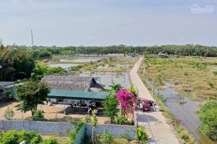 Bán nhanh nhà vườn 1711m2 ngay ĐT 826C có sẵn ao cá vườn cây, chim bồ câu, nhà, SHR, xe hơi tới đất ảnh 0