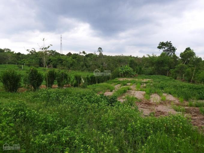 Cần bán khoảng 1 sào 4 (1424m2) đất Xà Bang, huyện Châu Đức, BRVT. Giá 1,6 tỷ. ảnh 0