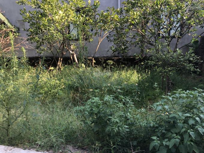 Bán gấp 42,8m2 đất Phố Keo - Kim Sơn, liên hệ chính chủ ảnh 0