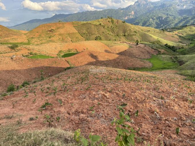 Đất Mộc Châu làm farmstay, chăn nuôi, trồng cây tất tần tần, gần Quốc Lộ 43 đường đi Lóng Sập ảnh 0