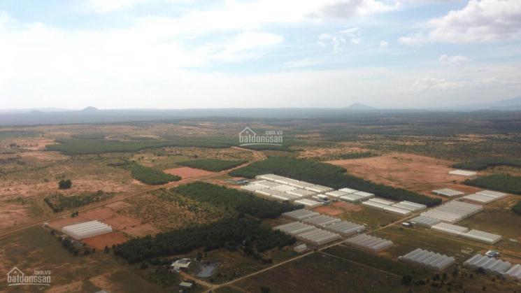 Bạn đang quan tâm đất sào Bình Thuận, gia tăng đột biến nhờ Cao Tốc? Chỉ với 120.000đ/m2 ảnh 0