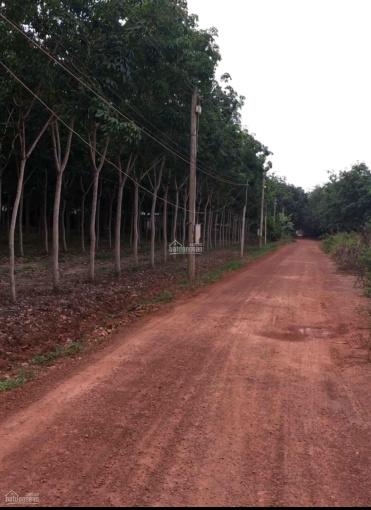 Bán gấp 17 mẫu đất cao su Ấp Hòa Đông A, Xã Hòa Hiệp, Tân Biên, Tây Ninh ảnh 0
