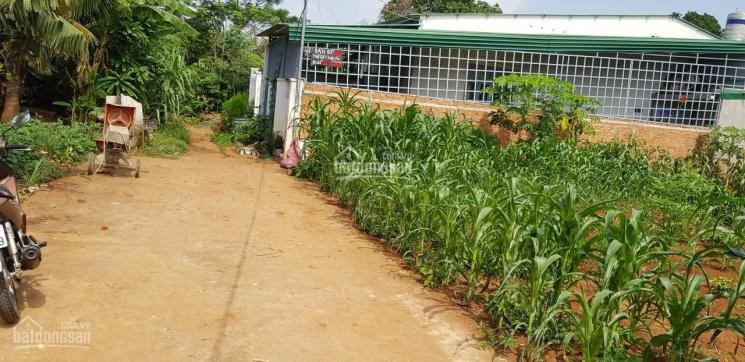 Chính chủ bán lô đất 10x22m ngay đường B4, Phạm Ngũ Lão, TP. Buôn Ma Thuột, LH: 0935232968 ảnh 0