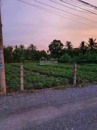 Ra miếng đất vườn Bình Mỹ, Củ Chi, 33x48m giá 6tr/m2 1 sẹc Tỉnh Lộ 9, giáp sông Sài Gòn ảnh 0