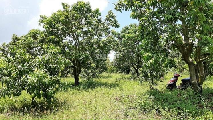 Với diện tích 6.614,6m2 lô đất có vườn cây ăn trái tuyệt đẹp, biệt thự, phân lô
