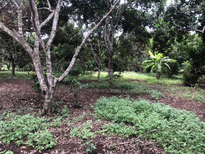 Cần bán đất vườn trái cây Bình Lộc, Long Khánh, liên hệ: 0836 659 140 ảnh 0