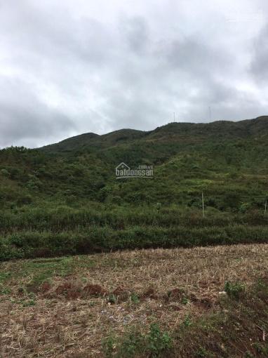 Bán 1000ha đất rừng sản xuất tỉnh Lai Châu, giá 40 tỷ ảnh 0