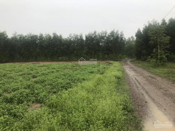 Chính chủ gửi bán 1000m2 đất tại xã Tân Hiệp, gần đường lên cổng số 2 SB Long Thành ảnh 0